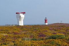 Gorse-and-Heather-at-Point-of-Ayre